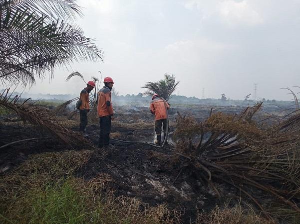 https: img.okezone.com content 2019 08 09 340 2089614 polisi-indikasikan-1-korporasi-bakal-jadi-tersangka-kebakaran-hutan-dan-lahan-di-riau-M8OnW2uxgQ.jpg