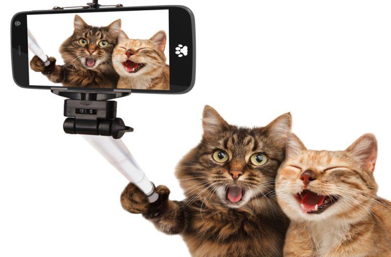https: img.okezone.com content 2019 08 09 612 2089731 hari-kucing-sedunia-kenali-keunggulannya-dibandingkan-pelihara-anjing-RCAM5bG8YN.jpg