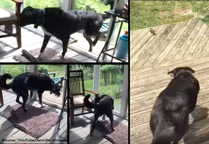 https: img.okezone.com content 2019 08 09 612 2089839 kisah-anjing-baik-hati-selamatkan-burung-yang-terjebak-EyeyqArR6X.jpg