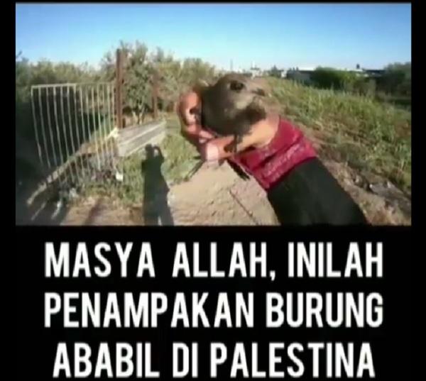 https: img.okezone.com content 2019 08 10 614 2090307 viral-penampakan-burung-ababil-di-palestina-benarkah-IHXHqXnnjJ.jpg