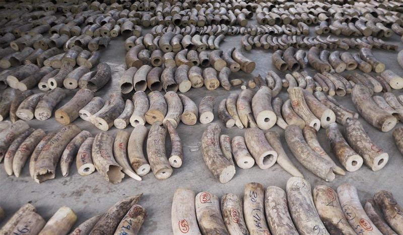 https: img.okezone.com content 2019 08 13 18 2091513 peringati-hari-gajah-sedunia-singapura-larang-total-perdagangan-gading-mulai-2021-wyRtBvUUbT.jpg