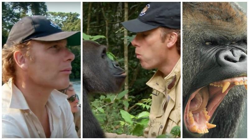 https: img.okezone.com content 2019 08 13 196 2091323 kisah-haru-persahabatan-damian-dan-kwibi-si-gorila-7cYhbXomcr.jpg