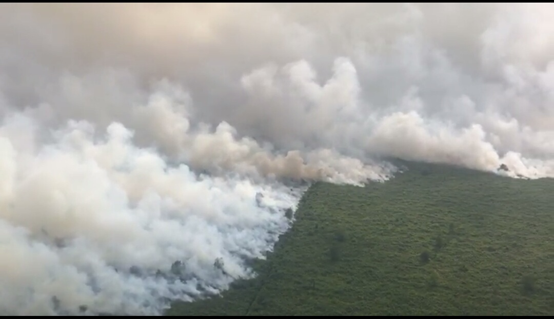 https: img.okezone.com content 2019 08 14 610 2091799 lahan-di-sumsel-kembali-terbakar-ratusan-hektare-hangus-dalam-semalam-L8WLe2QWue.jpg