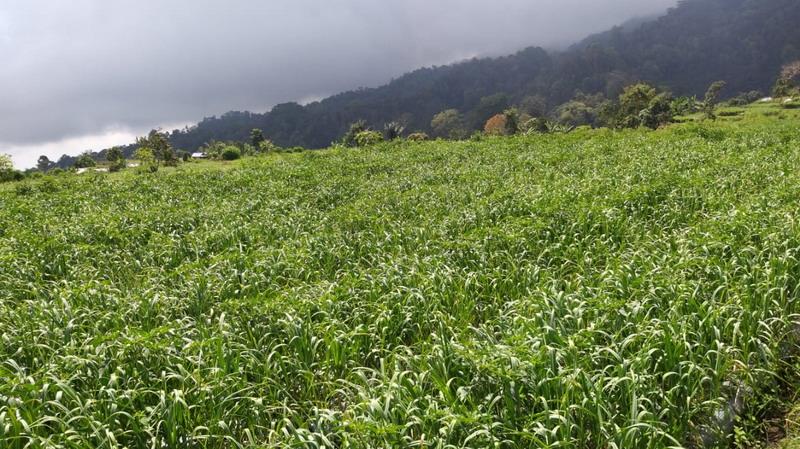 https: img.okezone.com content 2019 08 16 1 2092943 soal-impor-hortikultura-kementan-tegaskan-hanya-beri-rekomendasi-teknis-WeTBikdWW9.jpg