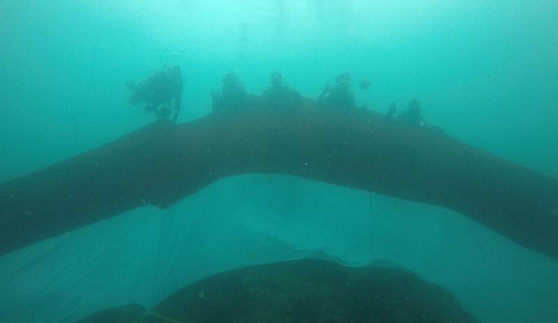https: img.okezone.com content 2019 08 18 406 2093486 10-penyelam-bentangkan-bendera-74-meter-di-bawah-laut-papua-barat-RE4Epolg8S.jpg