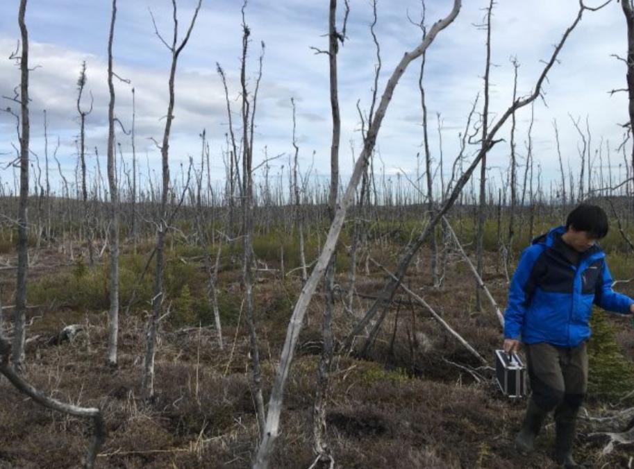 https: img.okezone.com content 2019 08 18 56 2093574 nasa-teliti-dampak-kebakaran-hutan-arktik-di-alaska-nEwMI1o6y0.jpeg