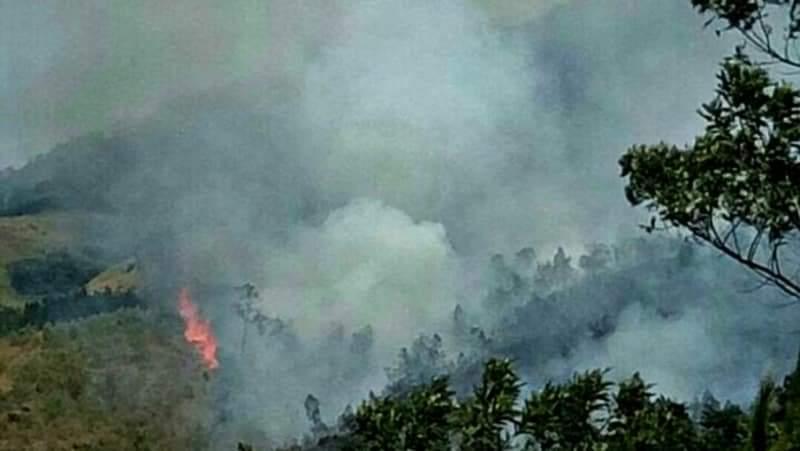 https: img.okezone.com content 2019 08 19 519 2093689 15-hektare-lahan-di-gunung-arjuno-terbakar-1CznM1SdLe.jpeg