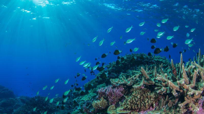 https: img.okezone.com content 2019 09 02 56 2099687 peningkatan-suhu-laut-ancam-organisme-dan-terumbu-karang-a27HUWmOCn.jpg