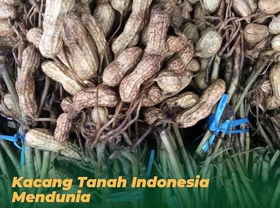 https: img.okezone.com content 2019 09 03 320 2100152 menggebrak-kacang-tanah-indonesia-tembus-pasar-dunia-oB4WNxXUEb.png