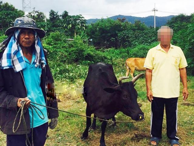 https: img.okezone.com content 2019 09 06 18 2101644 pria-68-tahun-tepergok-perkosa-sapi-ditanya-alasannya-pelaku-hanya-tersenyum-GiCHNfWixs.jpg