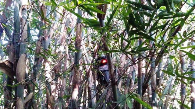 https: img.okezone.com content 2019 09 11 337 2103218 viral-ojol-dapet-order-mistis-motornya-nyangkut-di-pohon-bambu-pcCw9IoqBn.jpg