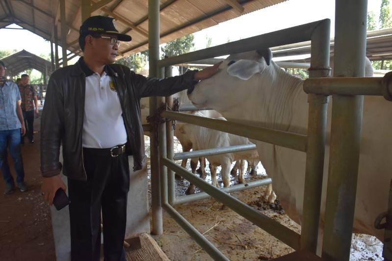 https: img.okezone.com content 2019 09 14 1 2104771 indonesia-mampu-penuhi-protein-hewani-dalam-negeri-SmnKXzeyFf.jpeg
