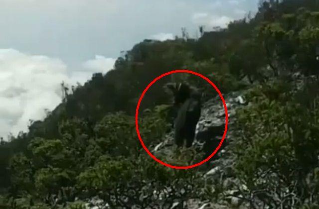 https: img.okezone.com content 2019 09 14 610 2104802 viral-kambing-hutan-sumatera-terlihat-di-gunung-dempo-N0O3cDLTFS.jpg