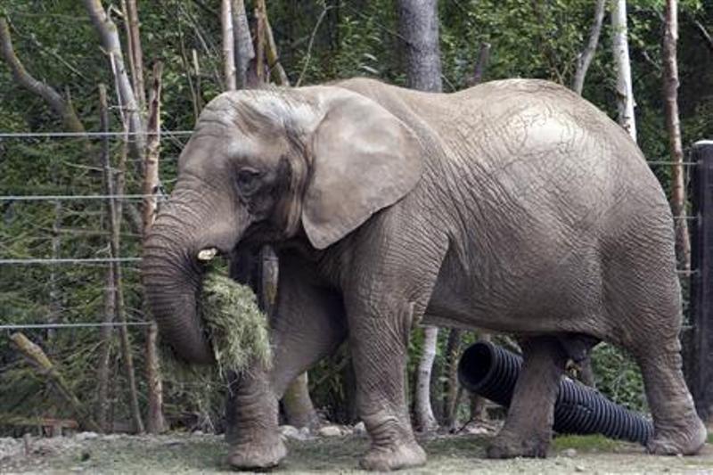 https: img.okezone.com content 2019 09 16 18 2105461 denmark-keluarkan-rp17-miliar-demi-pensiunkan-empat-gajah-dari-sirkus-gduNogLMEq.jpg