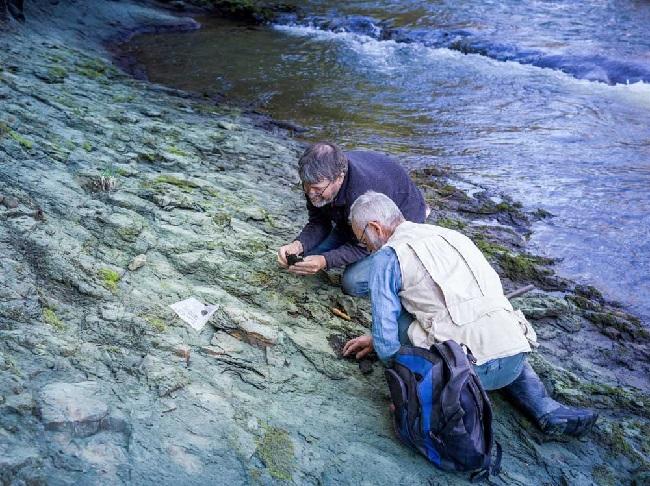 https: img.okezone.com content 2019 09 18 56 2106487 ilmuwan-temukan-fosil-burung-tertua-di-dunia-32hDrVx2rG.jpg