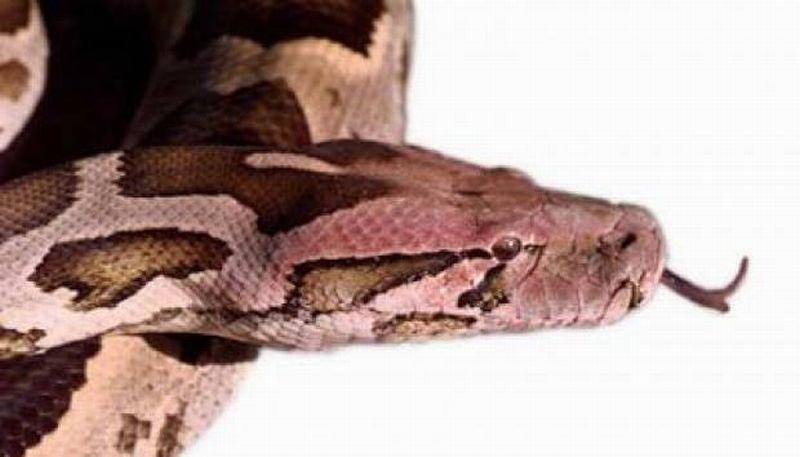 https: img.okezone.com content 2019 09 19 612 2107002 hati-hati-jika-ular-masuk-rumah-bisa-jadi-itu-jin-k1vaV0H4Hy.jpg