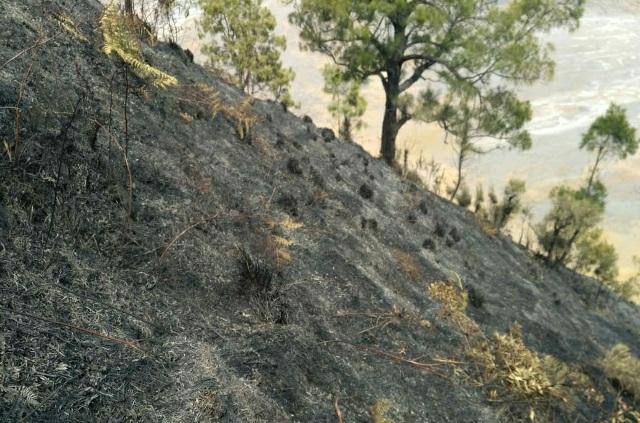 https: img.okezone.com content 2019 09 20 519 2107496 kebakaran-18-hektare-lahan-gunung-semeru-berhasil-dipadamkan-vQhjrSzPfD.jpg