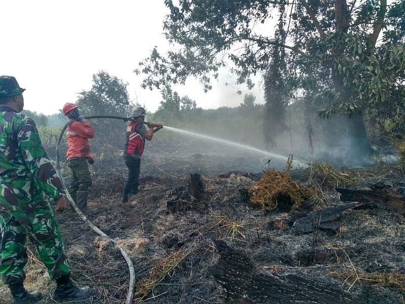 https: img.okezone.com content 2019 09 27 337 2109871 mayoritas-kebakaran-hutan-terjadi-di-lahan-milik-perorangan-H2FjNJigeM.jpg