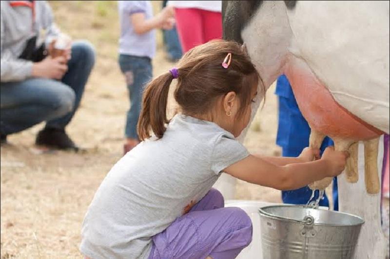 https: img.okezone.com content 2019 09 30 406 2111227 tak-perlu-ke-lembang-untuk-belajar-memerah-susu-sapi-coba-ke-cibugary-saja-QME0WkJiud.jpg