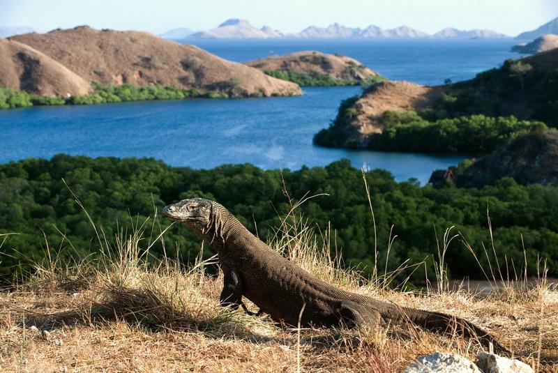 Dikembangkan Sebagai Wisata Premium, Taman Nasional Komodo Tidak Jadi  Ditutup : Okezone Travel