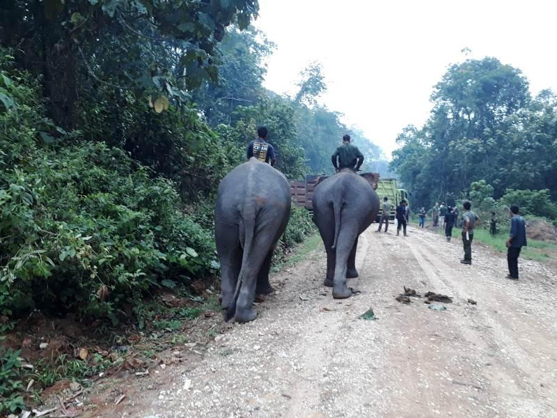 https: img.okezone.com content 2019 10 03 340 2112549 gajah-liar-di-jambi-lukai-warga-proses-evakuasi-berlangsung-menegangkan-EwuabM1RQF.jpg