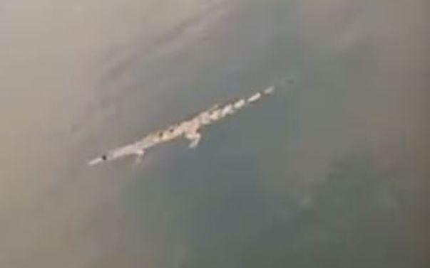 https: img.okezone.com content 2019 10 04 519 2112742 warga-digegerkan-kemunculan-buaya-di-sungai-bengawan-solo-VGAWuglnti.JPG