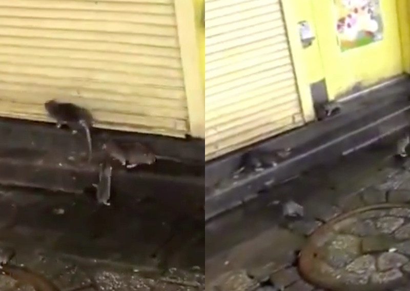 https: img.okezone.com content 2019 10 14 18 2116745 video-viral-tikus-penuhi-jalanan-tokyo-pasca-terjangan-topan-hagibis-w00HPREIl5.jpg