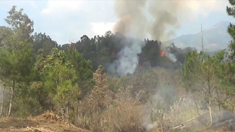 https: img.okezone.com content 2019 10 22 512 2120455 kebakaran-hutan-gunung-lawu-di-karanganyar-diduga-akibat-ulah-manusia-LqUOLyNyoT.JPG