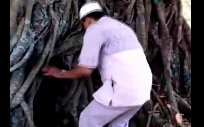 https: img.okezone.com content 2019 10 24 337 2121370 viral-pintu-makam-ulama-dari-rongga-akar-pohon-beringin-Nt9cDpvt4e.jpg