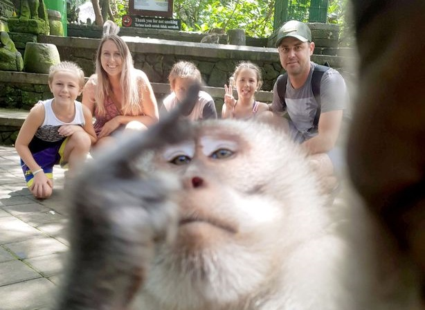 https: img.okezone.com content 2019 11 03 612 2125123 monyet-selfie-yang-bikin-heboh-dan-raih-penghargaan-eqC87eZJO1.jpg
