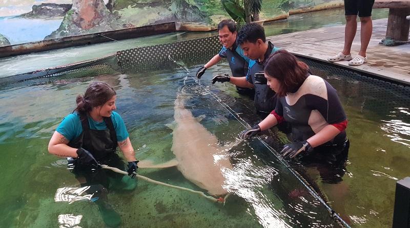 https: img.okezone.com content 2019 11 04 406 2125493 sensasi-berendam-bersama-ikan-pari-dan-hiu-di-irukandji-shark-and-ray-encounters-HMpQ6IV0DC.jpg