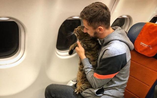 https: img.okezone.com content 2019 11 13 18 2129302 seorang-pria-akali-aturan-demi-kucingnya-yang-kegemukan-bisa-naik-kabin-pesawat-jO8lMUthWV.jpg