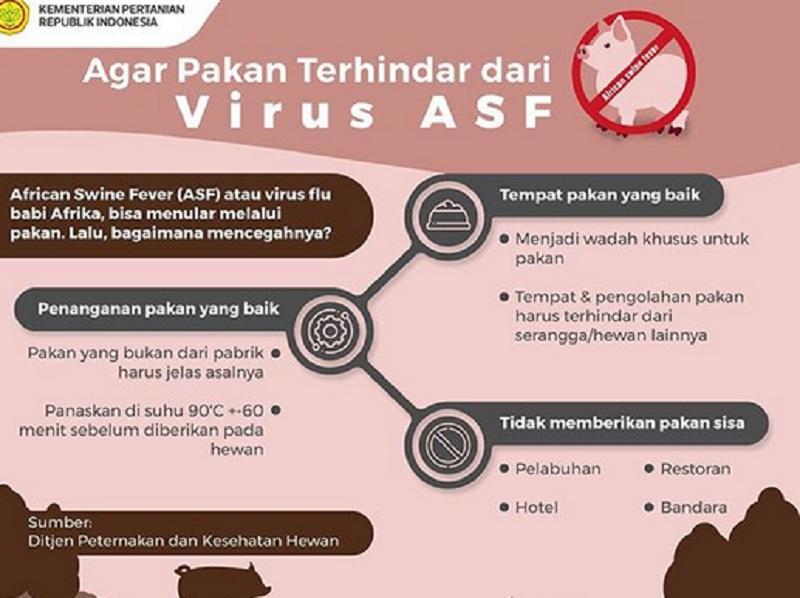 https: img.okezone.com content 2019 11 13 65 2129472 virus-flu-babi-ternyata-tidak-hanya-terjadi-di-afrika-d9BFJXaeqE.jpg