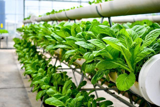 https: img.okezone.com content 2019 11 14 612 2129780 urban-farming-bisa-jadi-solusi-berkurangnya-lahan-pertanian-di-indonesia-G6pw1Wsdtm.jpg