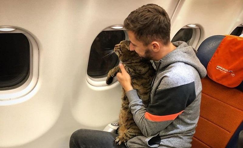 https: img.okezone.com content 2019 11 15 612 2130205 tipu-petugas-bandara-demi-terbang-bersama-kucing-kesayangan-pria-ini-dapat-sanksi-L48L3sMfm6.jpg