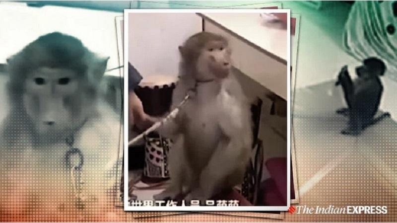 https: img.okezone.com content 2019 11 15 612 2130378 aksi-monyet-pintar-pesan-barang-belanjaan-secara-online-0FM3kvUNTU.jpg