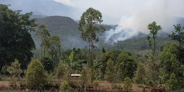 https: img.okezone.com content 2019 11 17 519 2130928 ini-penyebab-kebakaran-hutan-di-gunung-lawu-sulit-diatasi-prHZhcgEnI.jpg
