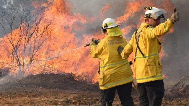 https: img.okezone.com content 2019 11 20 18 2132404 polisi-duga-kebakaran-hutan-di-queensland-akibat-ulah-anak-anak-gq6wfuzO33.jpg