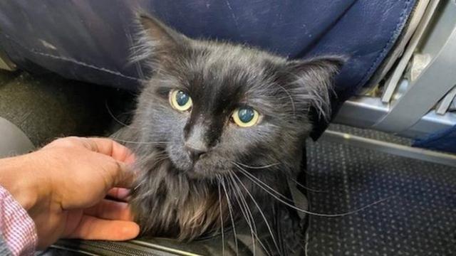 https: img.okezone.com content 2019 11 21 18 2132736 hilang-5-tahun-kucing-ini-ditemukan-1-900-km-dari-rumahnya-9LMs5eFbKI.jpg