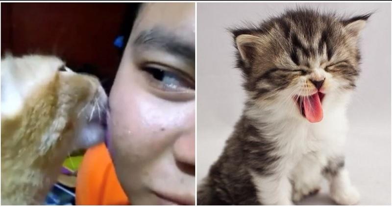 https: img.okezone.com content 2019 11 26 611 2134635 tak-perlu-skincare-mahal-gadis-ini-atasi-jerawat-dengan-jilatan-kucing-QgSAOB2Sod.jpg