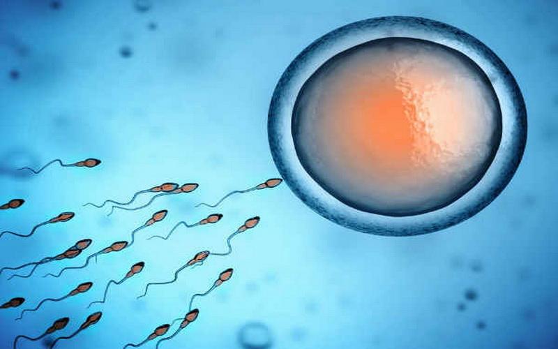 https: img.okezone.com content 2019 12 02 614 2137026 alquran-dan-sains-di-balik-proses-reproduksi-manusia-oBFmQNpWVn.jpg