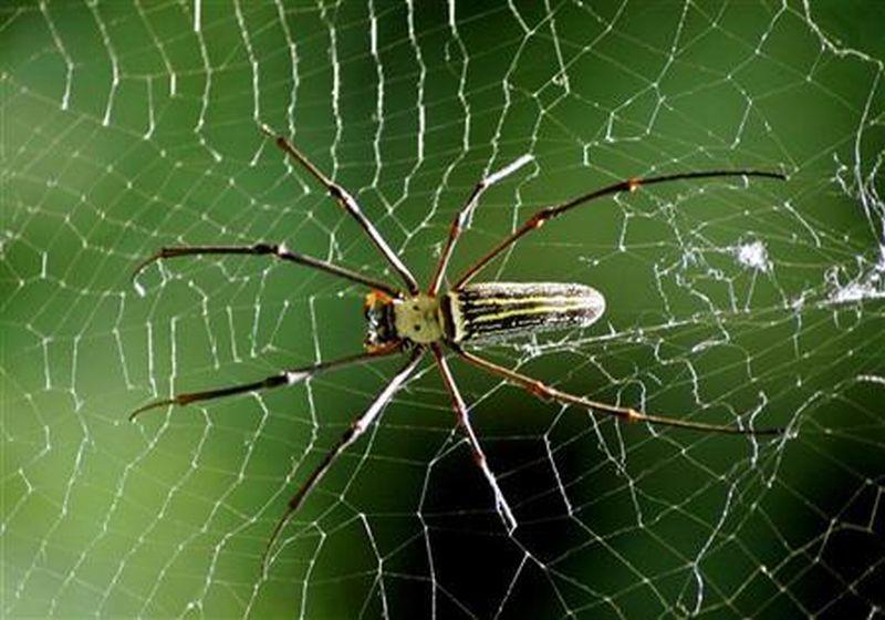 https: img.okezone.com content 2019 12 04 65 2138033 laba-laba-bisa-masuk-ke-mulut-manusia-saat-tidur-mitos-atau-fakta-LeldyMbeuO.jpg