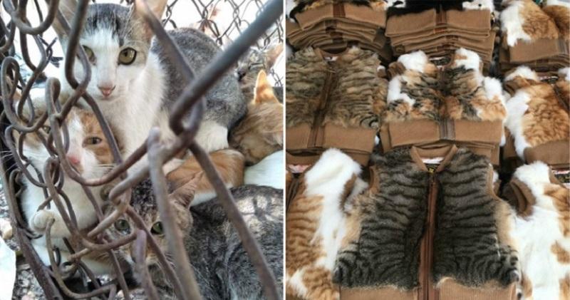Produk Fashion Dari Kulit Kucing Marak Di China Aktivis Hewan Angkat Bicara Okezone Lifestyle