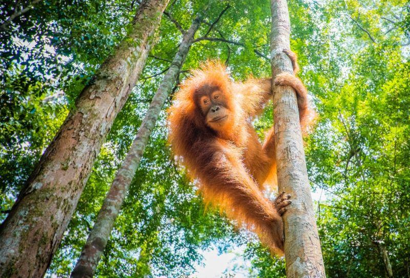 https: img.okezone.com content 2019 12 06 406 2138692 berkunjung-ke-sekolah-orangutan-di-samboja-lestari-balikpapan-seru-dan-menantang-mR26NzeZt6.jpg