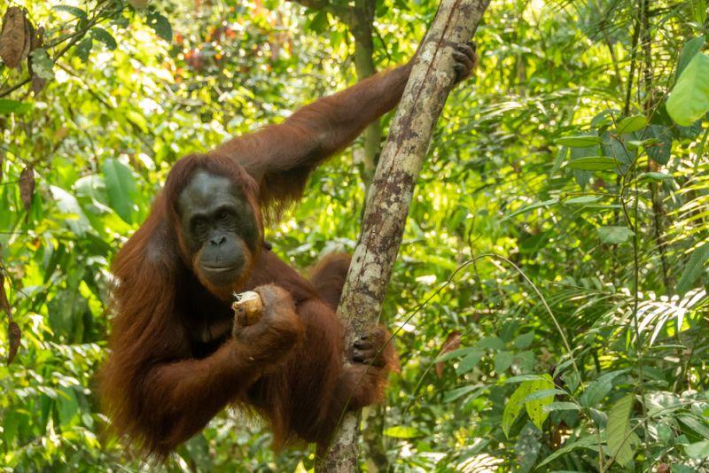 https: img.okezone.com content 2019 12 06 406 2138699 mau-bertemu-orangutan-ini-5-tips-jelajah-hutan-di-kalimantan-7z4dLKUtH8.jpg