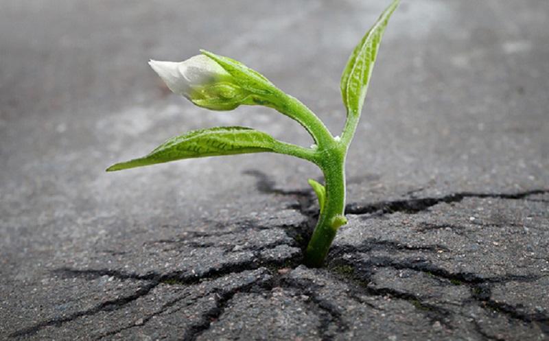 https: img.okezone.com content 2019 12 06 614 2138697 sains-dalam-alquran-pentingnya-retakan-retakan-bumi-bagi-kehidupan-uh2RliICba.jpg
