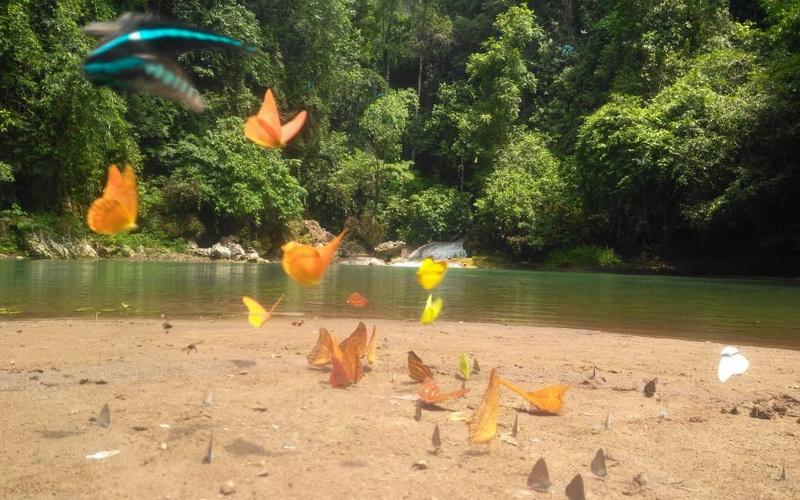 https: img.okezone.com content 2019 12 10 406 2140228 indahnya-danau-bantimurung-dipenuhi-ribuan-kupu-kupu-cantik-ClpWG2ALay.jpg