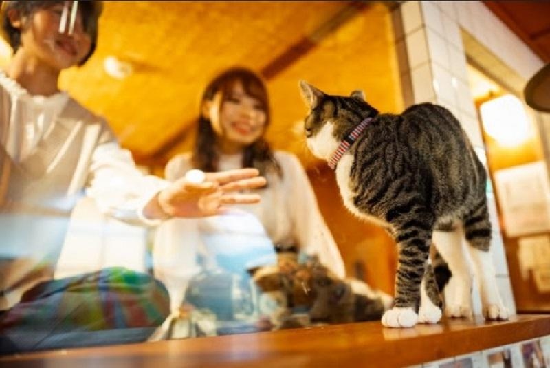 https: img.okezone.com content 2019 12 12 406 2141027 sensasi-menginap-di-hotel-kapsul-sambil-lihat-kucing-lucu-bermain-81VQOovZwR.jpg