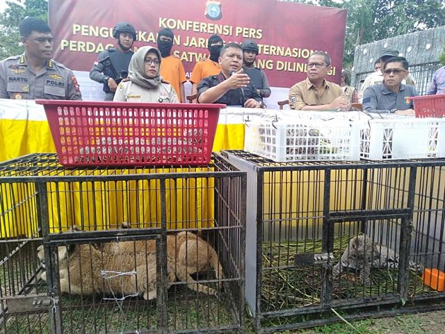 https: img.okezone.com content 2019 12 16 337 2142303 anak-singa-yang-diselundupkan-di-riau-dijual-rp450-juta-ekor-G2FHJieKWM.jpg