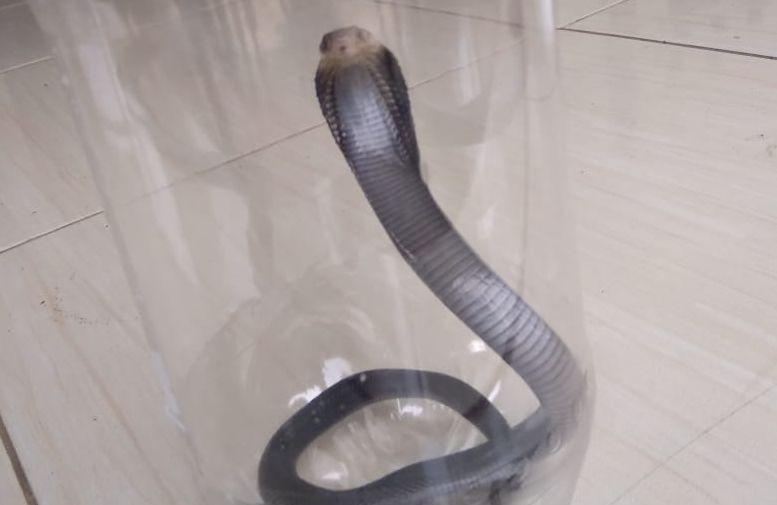 https: img.okezone.com content 2019 12 16 470 2142490 tenyata-ular-menyukai-tanah-di-kebun-depan-rumah-gSdEOukYxs.jpg